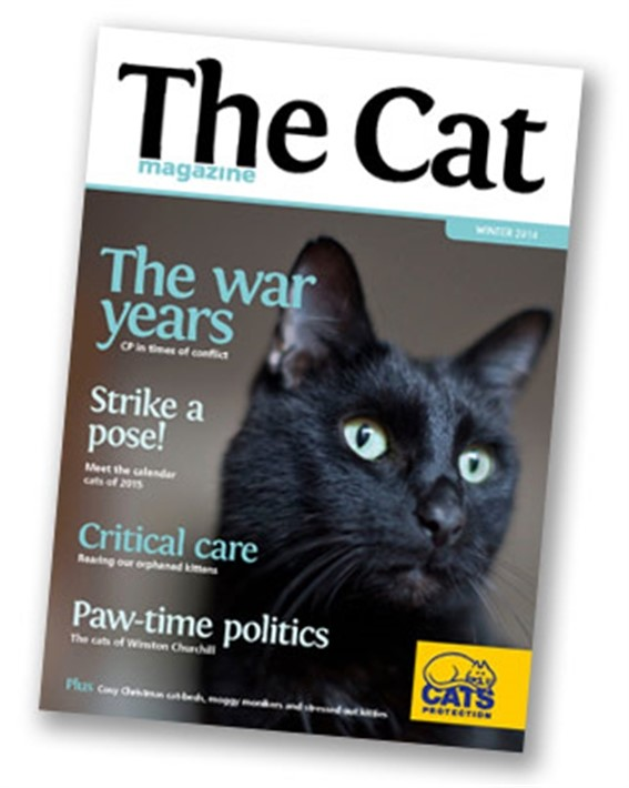 Cats protection - The Cat magazine featuring a black cat with blue eyes on the front page