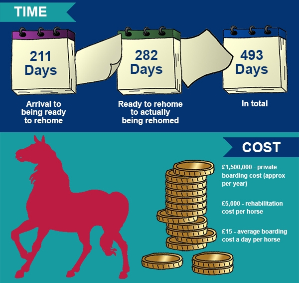 RSPCA Home for Horses infographic featuring a horse and some coins on the front