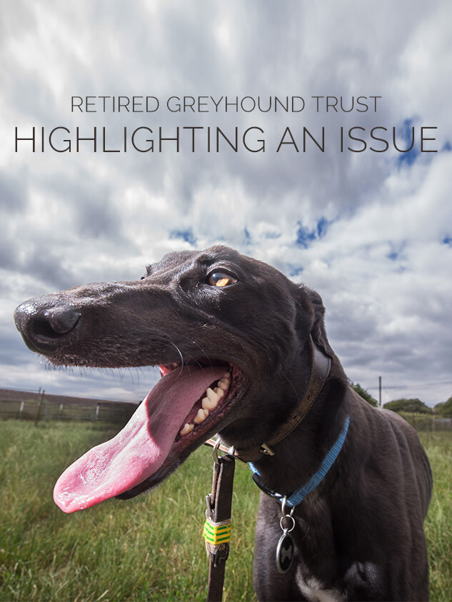 Retired Greyhounds Trust Charity PR Case Study