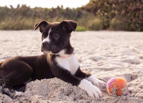 Dog Vacay Sharing Economy App PHA Media