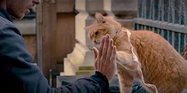 street cat named bob, movie