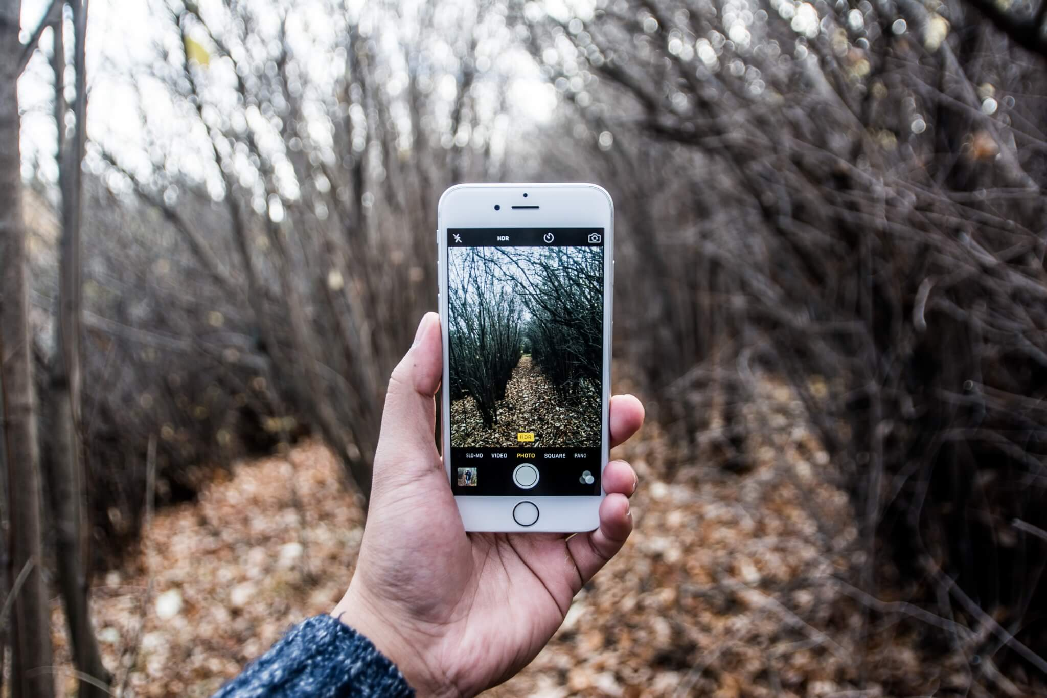 iPhone5s being used to take a picture of a forest