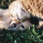Pets Petstagram Instagram Instafamous Famous