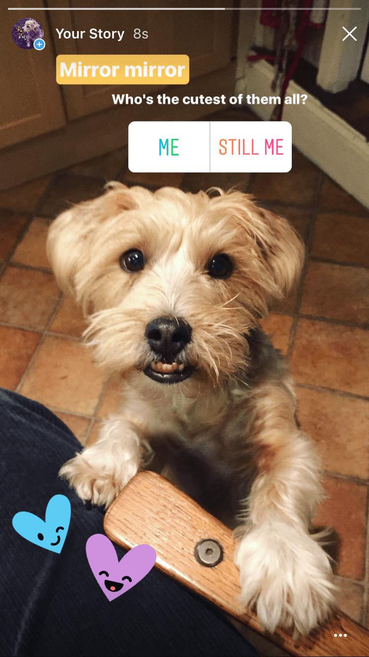 Instagram Story Dog Poll