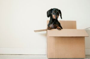 five pet startups you need to know about
